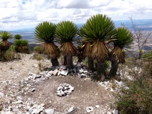 Cerro el Quemado, Santuario Huichol.