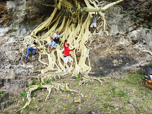 Senderistas en las raíces del árbol de Amate del Cerro  Chalcatzingo, municipio ce Jantetelco Estado de Morelos México