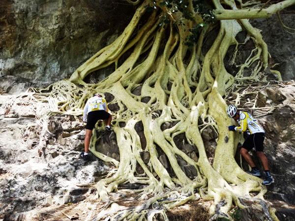 Senderistas y cicloturistas en las raíces del ärbol de amate del cerro Chalcatzingo, Municipio Jantetelco, Estado de Morelos México