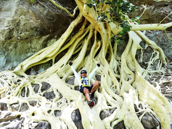 Raíces del árbol de amate amarillo y cicloturista en Cerro de Chalcatzingo, municipio de Jantetelco Estado de Morelos