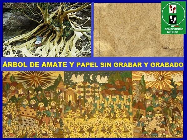 ärbol de amate amarillo y sus usos en la elaboración de papel y grabados ancestrales. Senderismo México en fotos