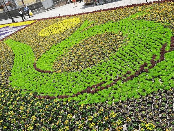Zócalo de Atlixco Pueblo Mágico con Tapete Monumental de flores, Estado de Puebla, México, senderismo urbano
